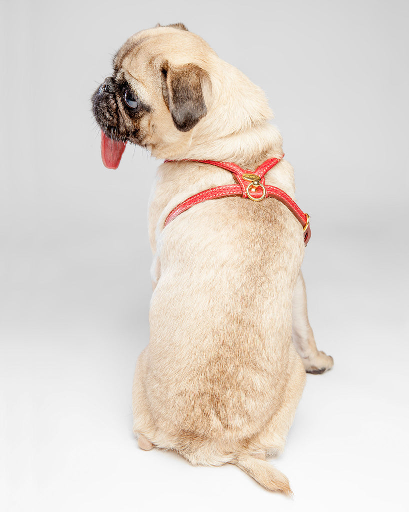 Italian Leather Harness in Red (FINAL SALE)