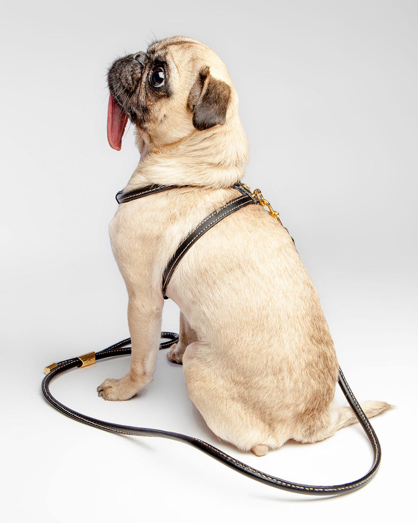 Italian Leather Leash in Black