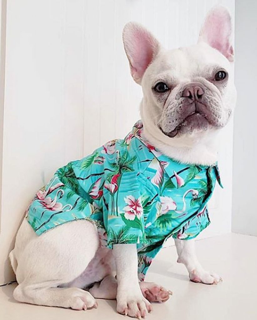 DOG THREADS | Flamingo Fresh BBQ Shirt