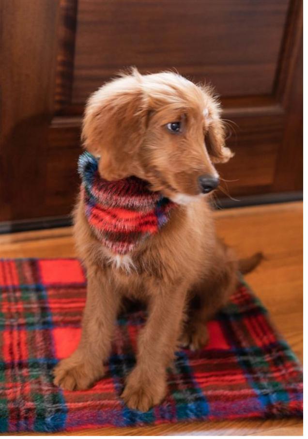 FABULOUS FURS | Dog Bandana in Red Plaid (FINAL SALE)