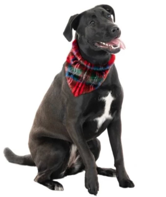 FABULOUS FURS | Dog Bandana in Red Plaid