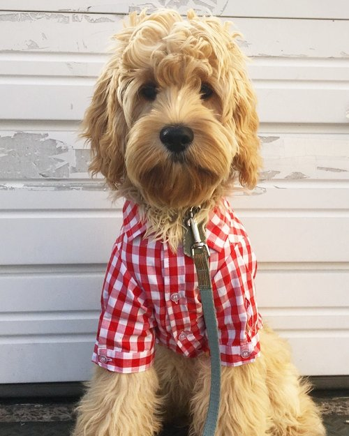 FAB DOG | Red Plaid Button Down