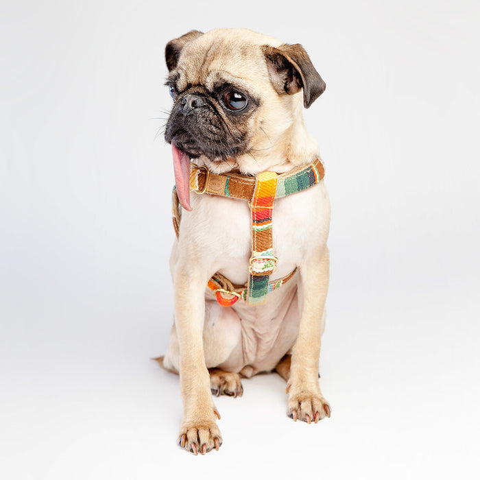 FINNEGAN'S STANDARD GOODS | Sunset Harness