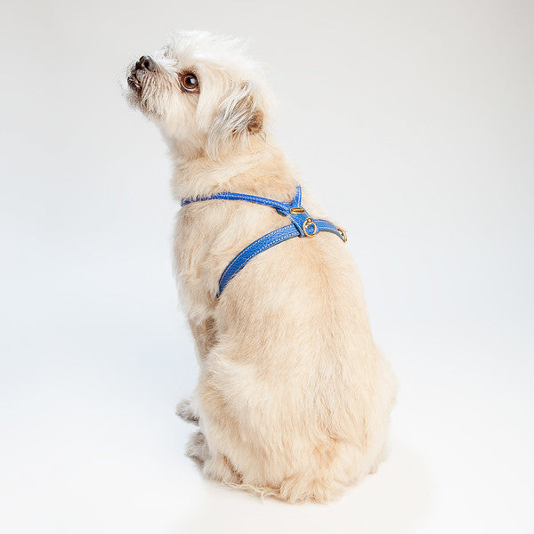 Italian Leather Leash in Blue