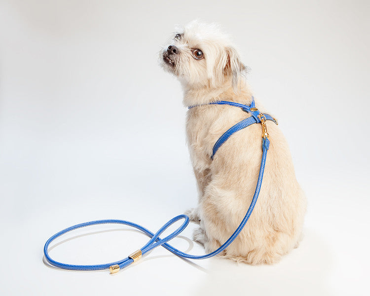 Italian Leather Harness in Blue