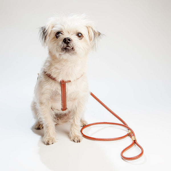 Italian Leather Leash in Brown