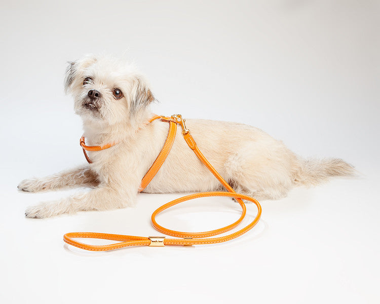 Italian Leather Leash in Orange
