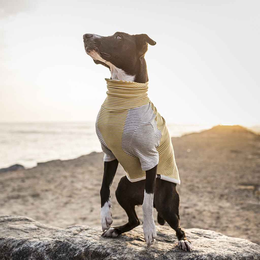 LONG DOG CLOTHING | The Early Bird