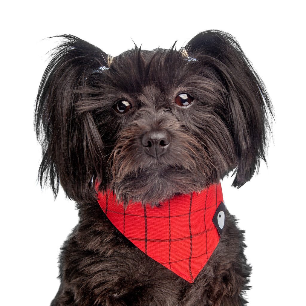 DOG & CO. | Check Bandana in Red