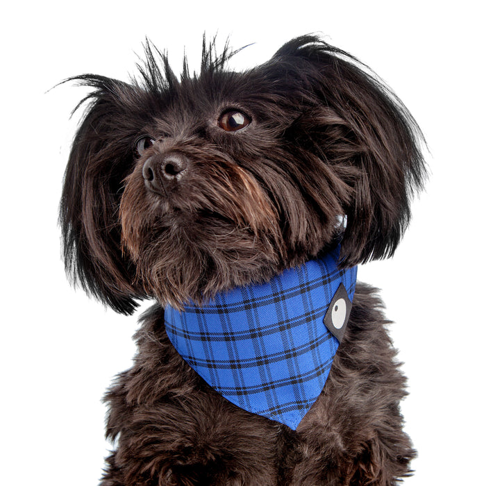 DOG & CO. | Check Bandana in Cobalt Blue