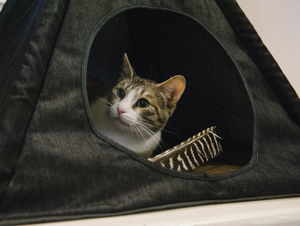 Denim Pet Tent (Drop-Ship)