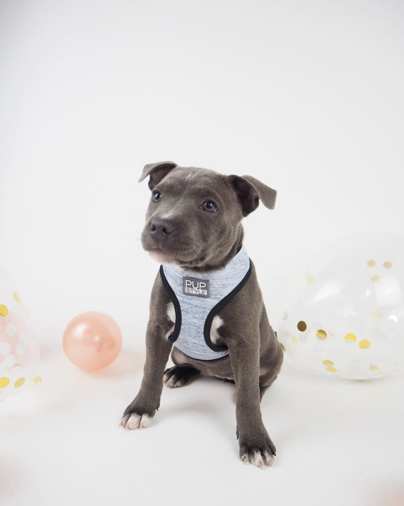 PUPSTYLE | Greys for Days Harness