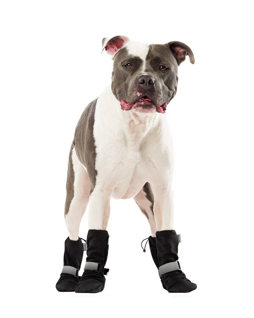 Soft Shield Dog Boots in Black