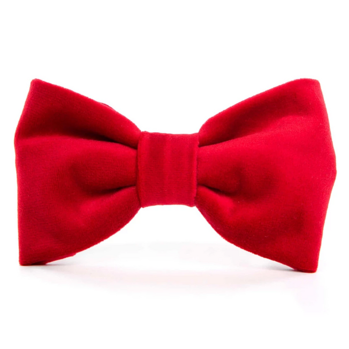 THE FOGGY DOG | Cranberry Velvet Bow Tie