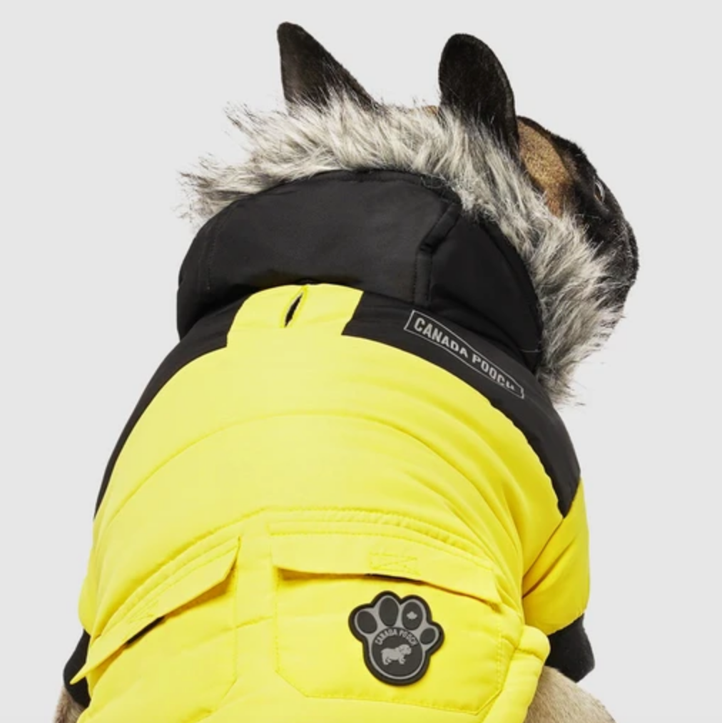 True North Dog Parka in Yellow