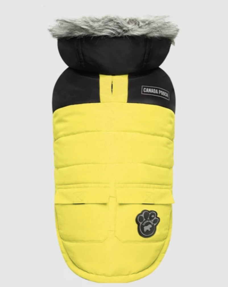 True North Dog Parka in Yellow (FINAL SALE)