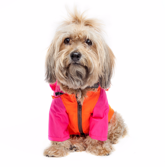 WAGWEAR | Nylon Colorblock Rainbreaker in Neon Pink + Orange