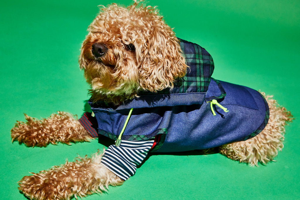 WARE OF THE DOG | Blue Anorak Raincoat with Tartan Trim
