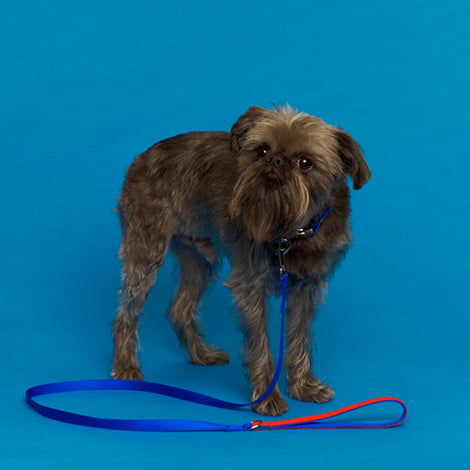 WARE of the DOG | Nylon Leash in Blue/Orange