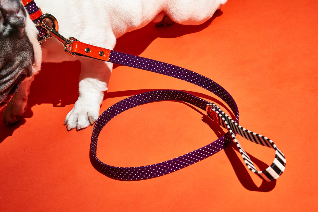 WARE of the DOG | Polka Dot Canvas Leash
