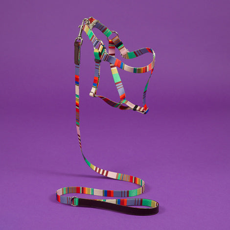 WARE of the DOG | Striped Webbing Leash