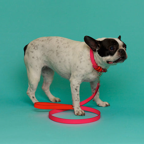 WARE of the DOG | Two Tone Leather Leash in Pink / Orange