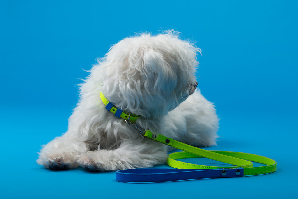 WARE of the DOG | Two Tone Leather Leash in Yellow / Blue