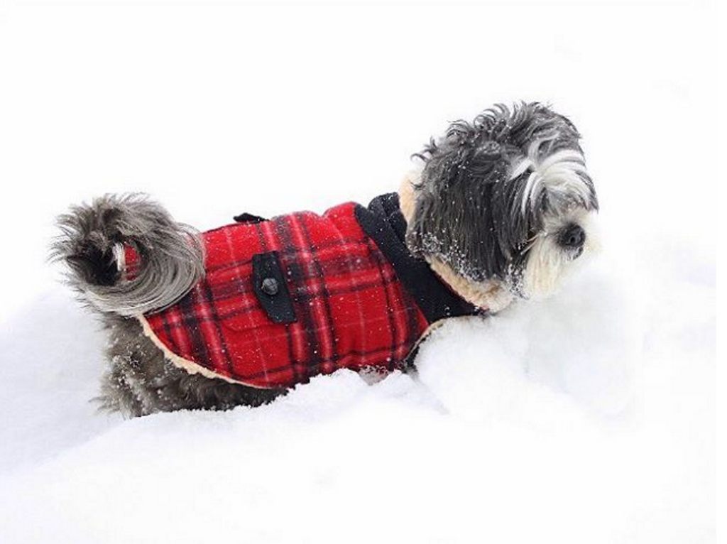 FAB DOG | Wool Plaid Shearling Jacket in Red (BIG DOG SALE)