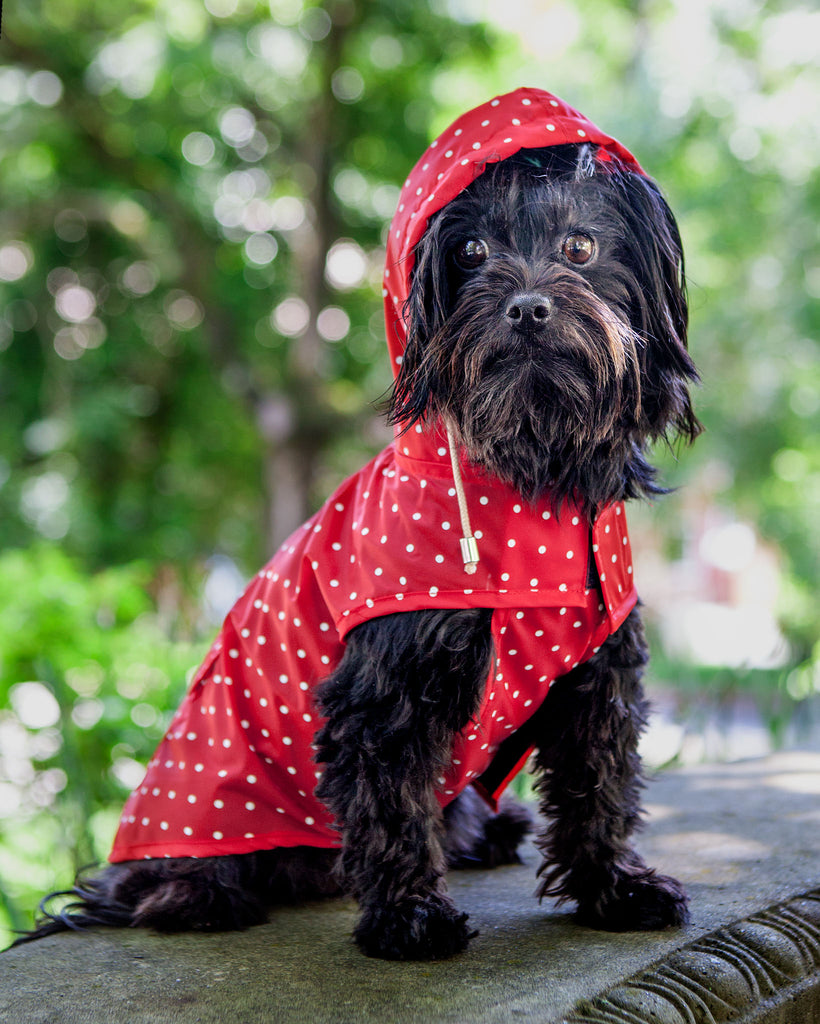 Polka Dot Anorak Raincoat in Red (Immediate Ship)