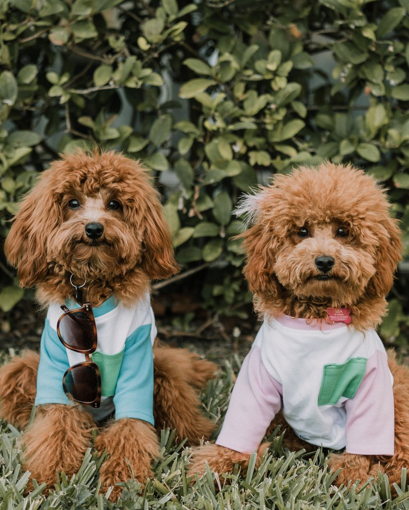 DOG THREADS | OMG Pocket Tee