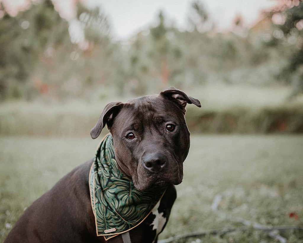 THE FOGGY DOG | Havana Bandana