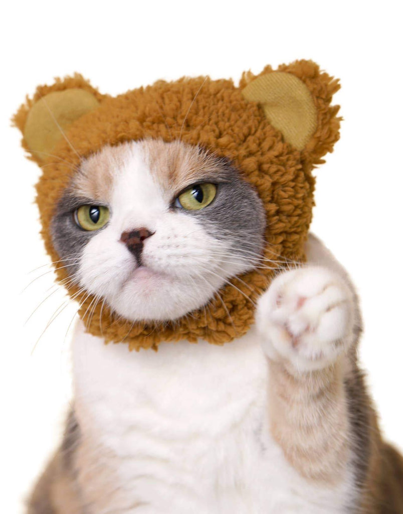Japanese Cat Hat - Bear (Surprise Box)