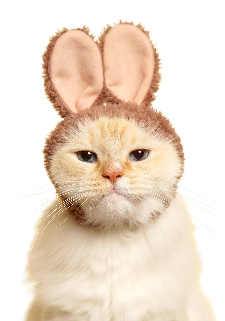 Japanese Cat Hat - Rabbit (Surprise Box)