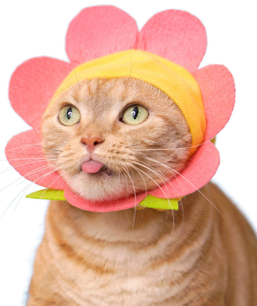 Japanese Cap for Cats - Flower (Surprise Box)