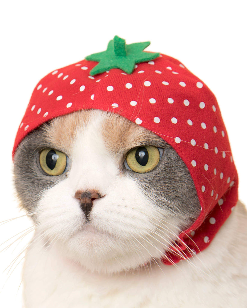 Japanese Cap for Cats - Fruit (Surprise Box)