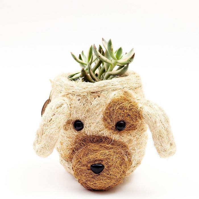 LIKHA | Diego the Dog Planter