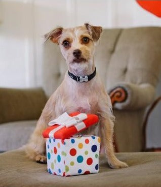 Pawfect Present Toy (FINAL SALE)