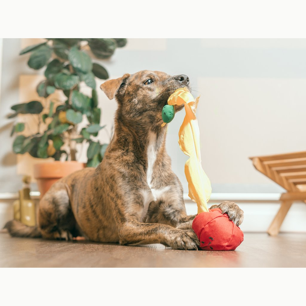 Tomato Interactive Nosework Dog Toy