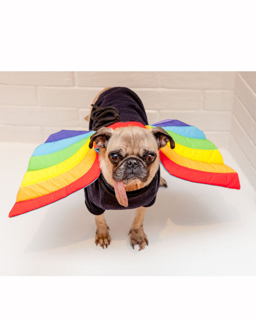 Adjustable Tie-On Rainbow Dog Wings
