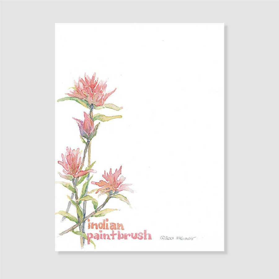 161 Indian paintbrush notepaper