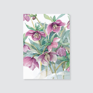 147GE Lenten rose gift enclosure