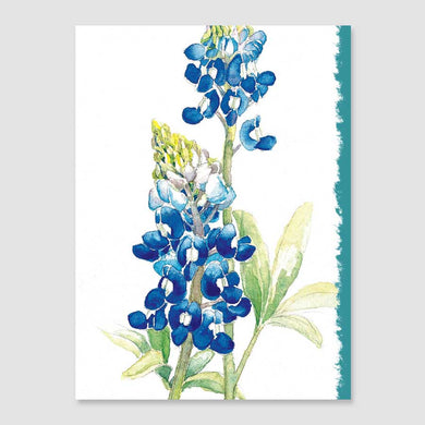 196MN bluebonnet mini-note card