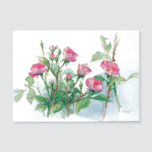 145 shrub rose note card / mini-note card