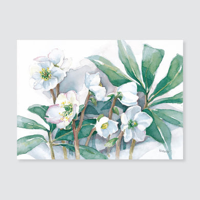 148 Christmas rose note card / mini-note card