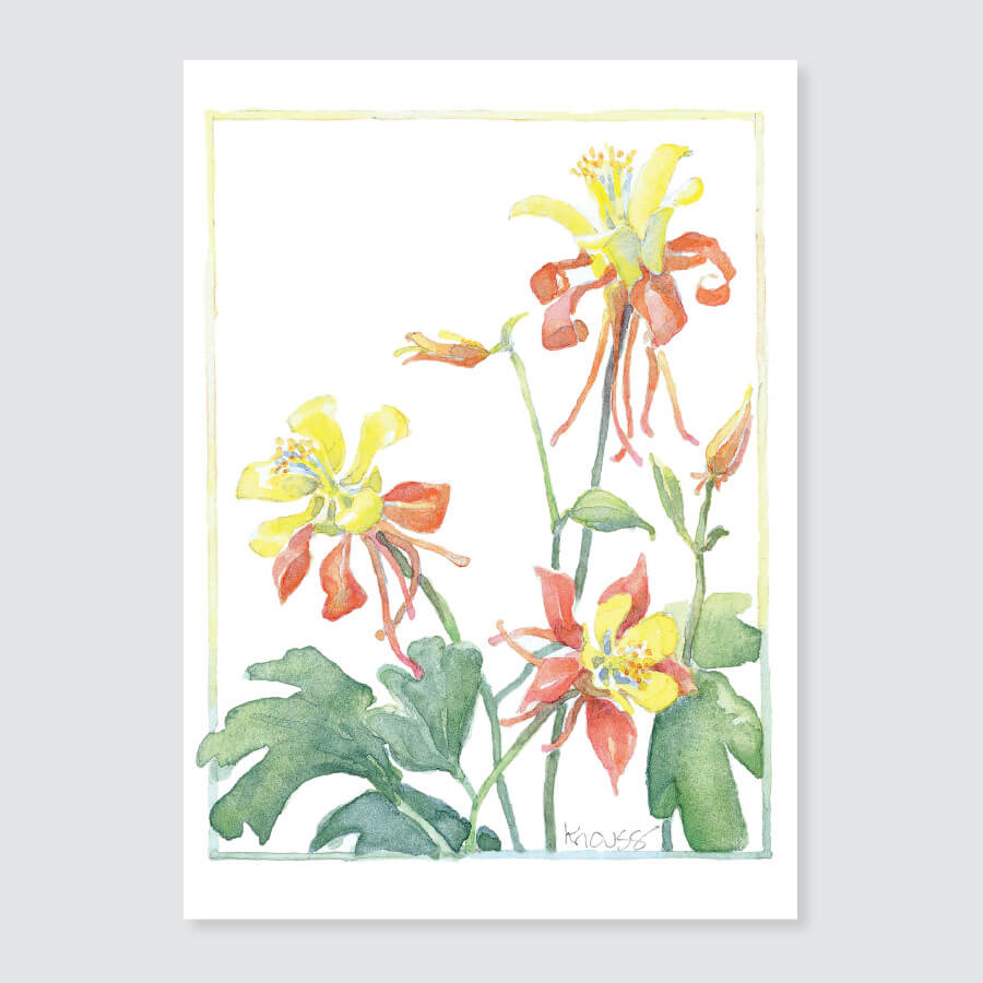177 orange columbine note card
