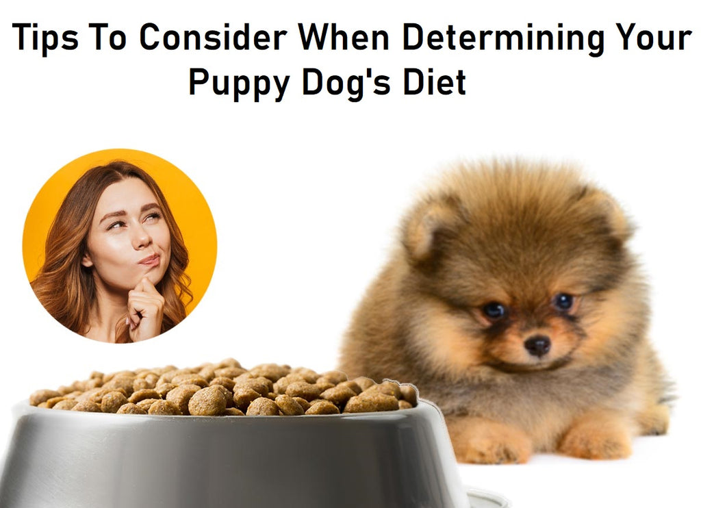 Tips To Consider When Determining Your Puppy Dog's Diet