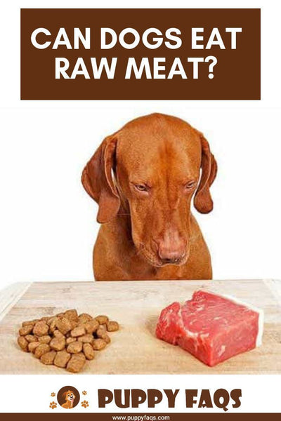 Dogs Can Eat Raw Meat