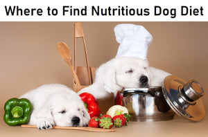 Where to Find Nutritious Dog Diet