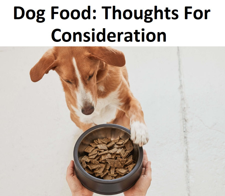 Dog Food: Thoughts For Consideration