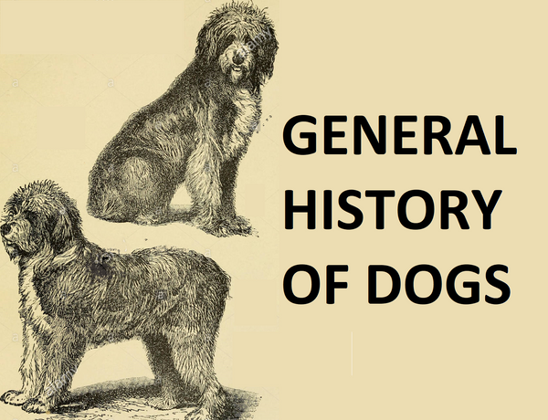 GENERAL HISTORY OF DOGS,the history of dogs as pets,history of dogs timeline,history of dogs in america,when did dogs become indoor pets,dogs family,what were the first dogs like,how were dogs created,origins of dogs